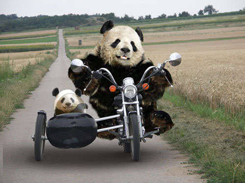 Warriorpanda.com
